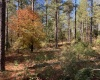 Abbeville County, ,Land,Active,1070