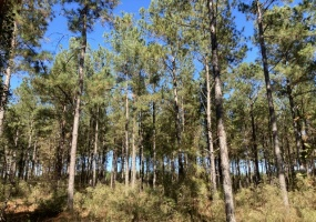Newberry County, ,Land,Contract Pending,1071