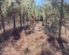 Newberry County, ,Land,Sold,1071